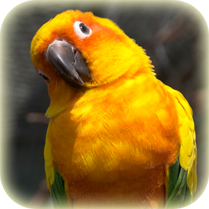 Conservation Conure