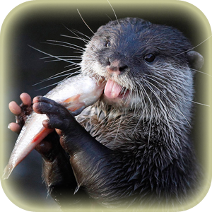 Mammals at Lincs Wildlife - Otters