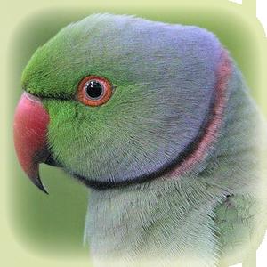 Birds - Parrots, Kookaburras, Emu, Parrakeets & More! | Lincolnshire