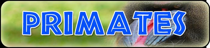 primates banner