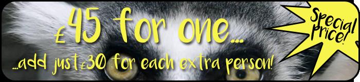 Lemur price banner