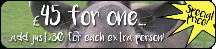 Tapir price banner