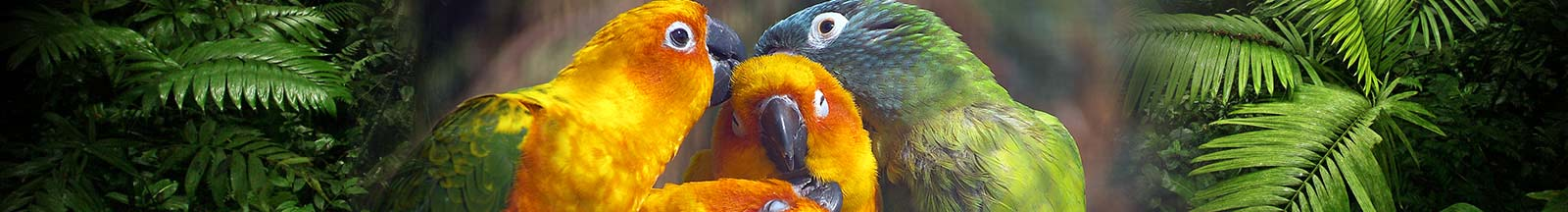 The National Parrot Sanctuary | Lincolnshire Wildlife Park